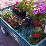 a flower shopping we will go
