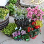 Curb Appeal Challenge, adding the flowers