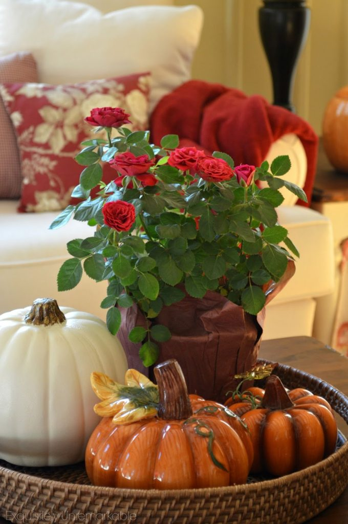 pumpkins-and-roses-for-fall
