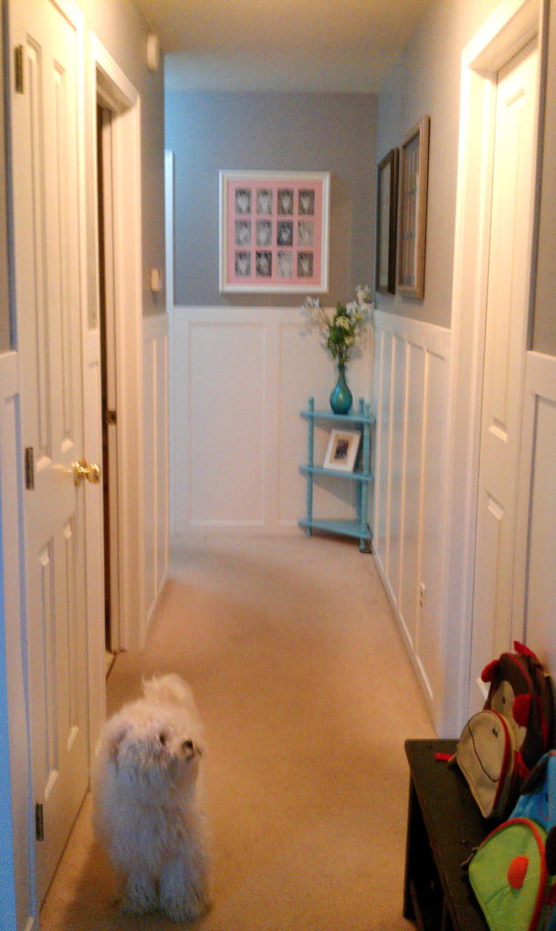 Here Is A Fluffy Teddy And The Hallway Right After Wainscoting Before Door Handle Changes Wood Floors Barn Was Installed